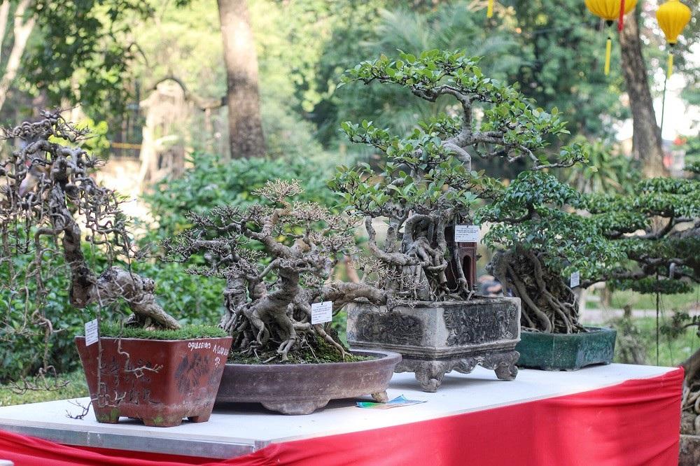 """""""Kỳ họa, dị thảo"""" hội tụ ở Hà Nội khiến dân chơi cây cảnh phát sốt - Ảnh 10."""