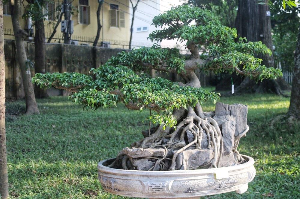 """""""Kỳ họa, dị thảo"""" hội tụ ở Hà Nội khiến dân chơi cây cảnh phát sốt - Ảnh 12."""