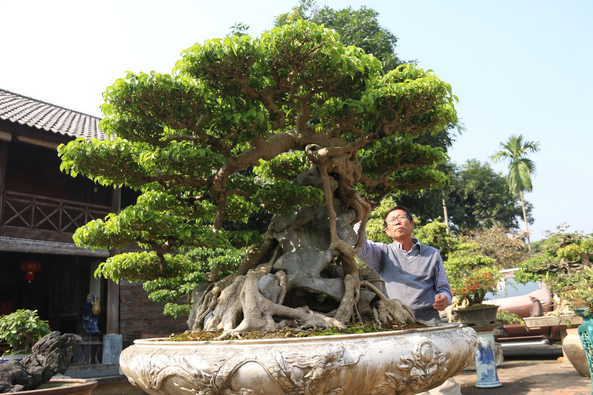 Chiêm ngưỡng sanh cổ dáng phượng giá triệu đô của ông vua cây cảnh Việt Nam - Ảnh 11.