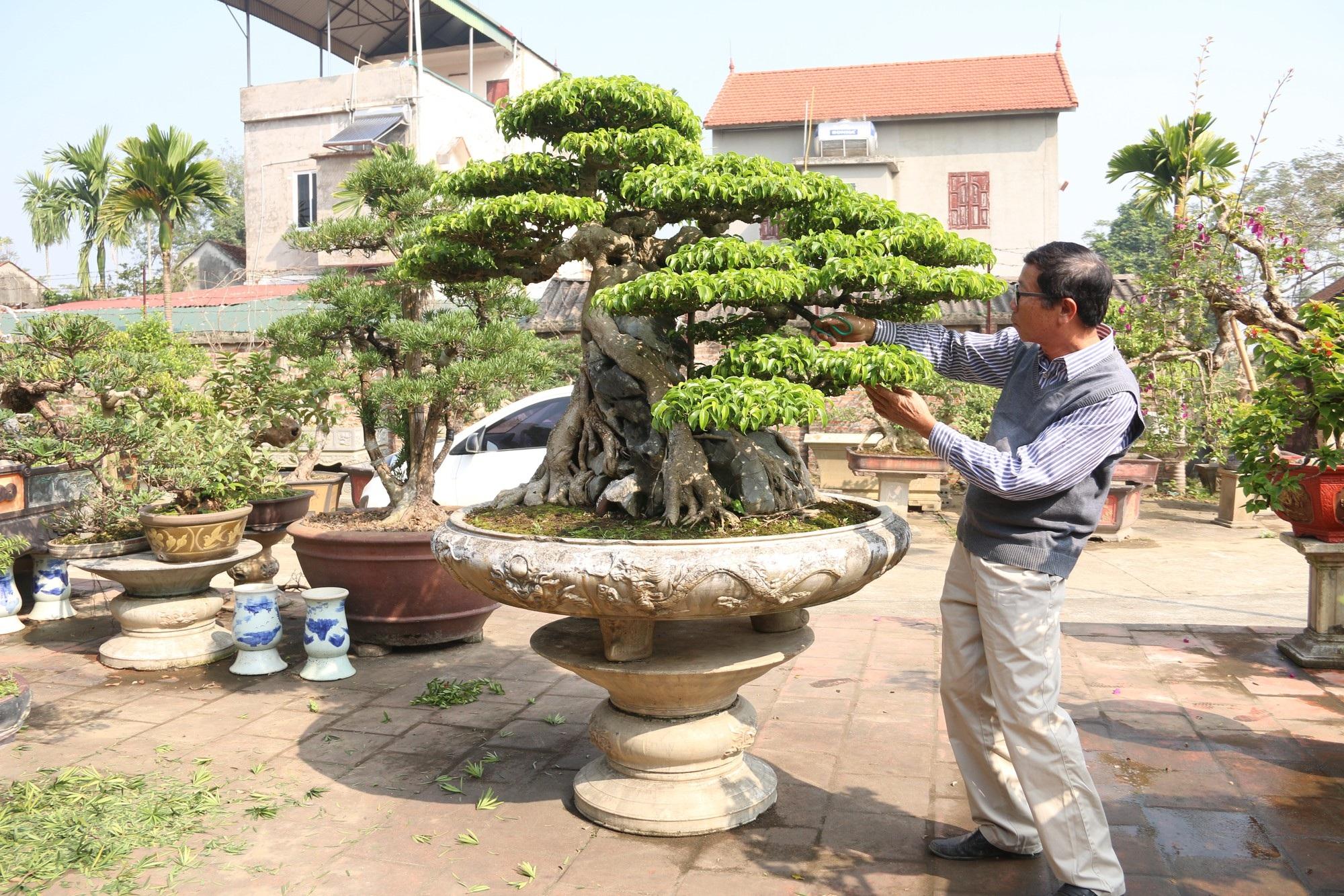 Chiêm ngưỡng sanh cổ dáng phượng giá triệu đô của ông vua cây cảnh Việt Nam - Ảnh 2.