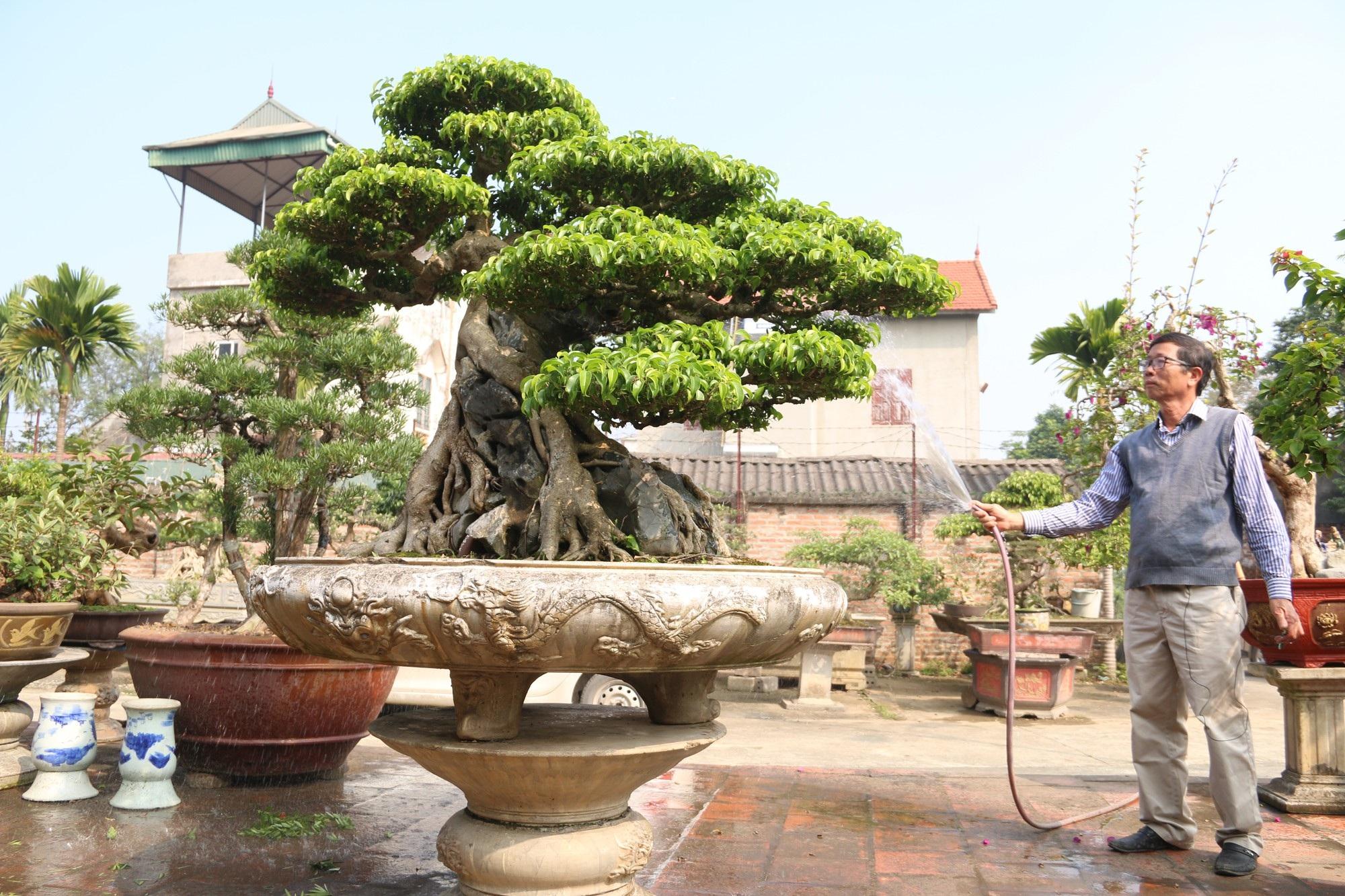 Chiêm ngưỡng sanh cổ dáng phượng giá triệu đô của ông vua cây cảnh Việt Nam - Ảnh 7.
