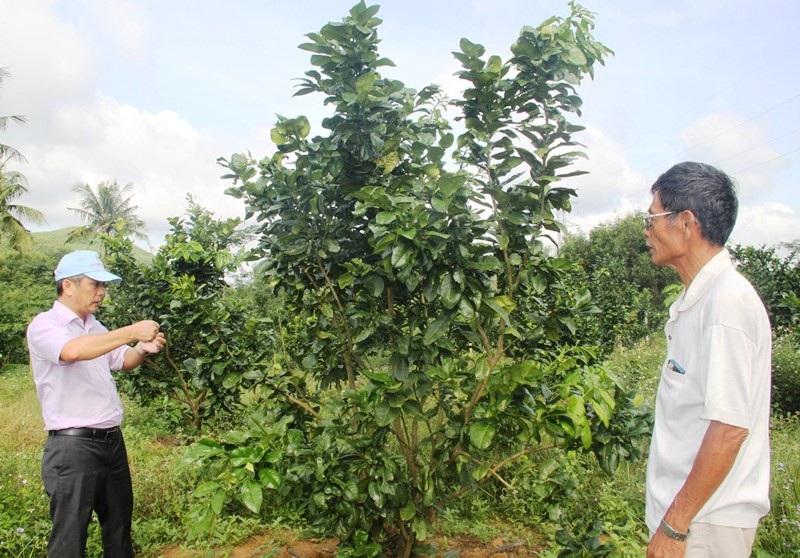 Độc chiêu trồng tiêu cho bám thân dừa mang hiệu quả kép - Ảnh 7.