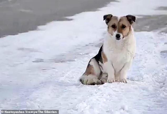 Chú chó đợi chủ suốt 6 tháng giữa trời lạnh âm 30 độ khiến dân mạng cảm động - Ảnh 1.