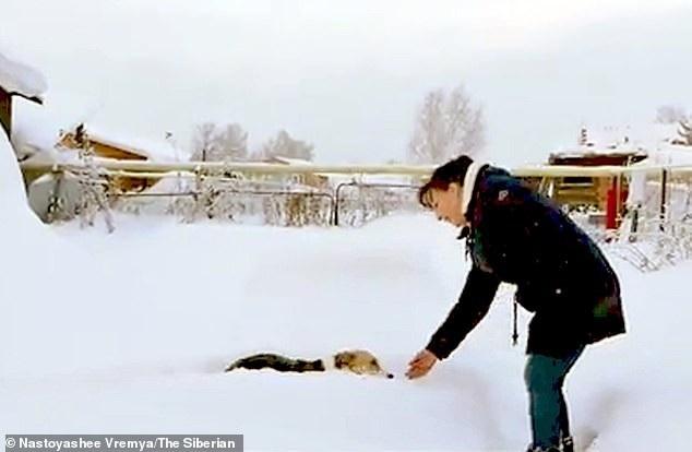 Chú chó đợi chủ suốt 6 tháng giữa trời lạnh âm 30 độ khiến dân mạng cảm động - Ảnh 2.