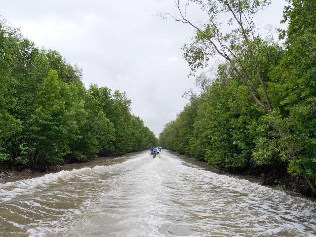 Mở tuyến tham quan xuyên rừng Vườn Quốc gia Mũi Cà Mau - Ảnh 4.
