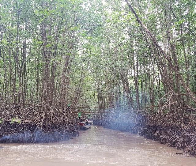 Mở tuyến tham quan xuyên rừng Vườn Quốc gia Mũi Cà Mau - Ảnh 6.