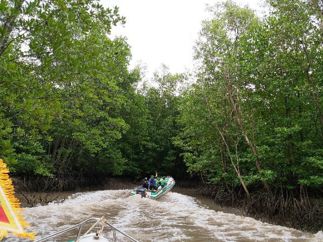 Mở tuyến tham quan xuyên rừng Vườn Quốc gia Mũi Cà Mau - Ảnh 5.