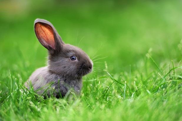 """Biến cây trồng trong nhà thành """"máy lọc không khí"""" nhờ DNA của… thỏ - Ảnh 1."""