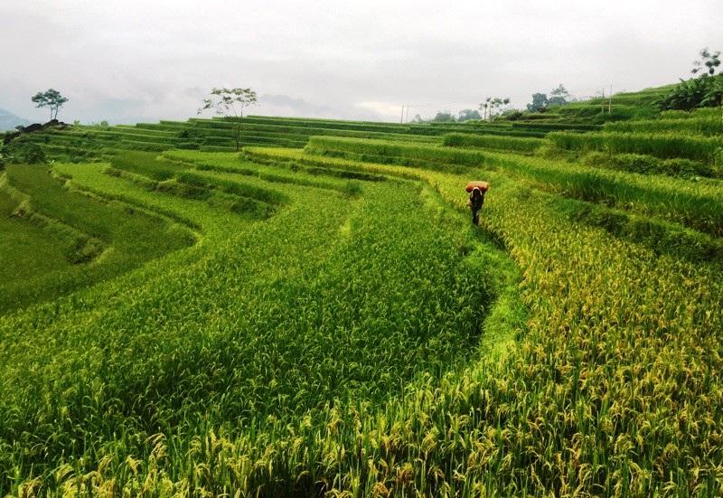 Thanh Hoá: Đầu tư hơn 25 nghìn tỷ đồng phát triển du lịch - Ảnh 2.
