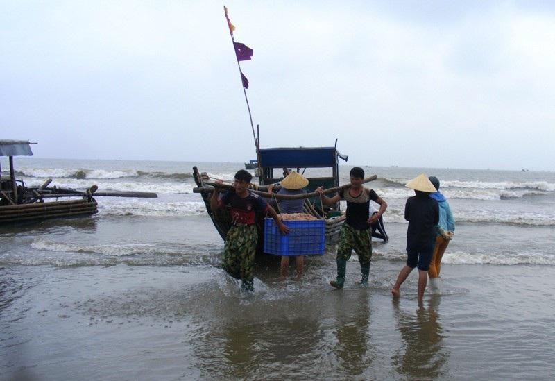 Cuối năm, ngư dân xứ Thanh trúng đậm mùa moi biển - Ảnh 1.