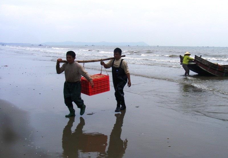 Cuối năm, ngư dân xứ Thanh trúng đậm mùa moi biển - Ảnh 2.