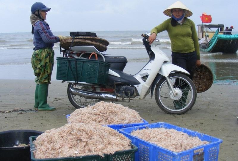 Cuối năm, ngư dân xứ Thanh trúng đậm mùa moi biển - Ảnh 9.