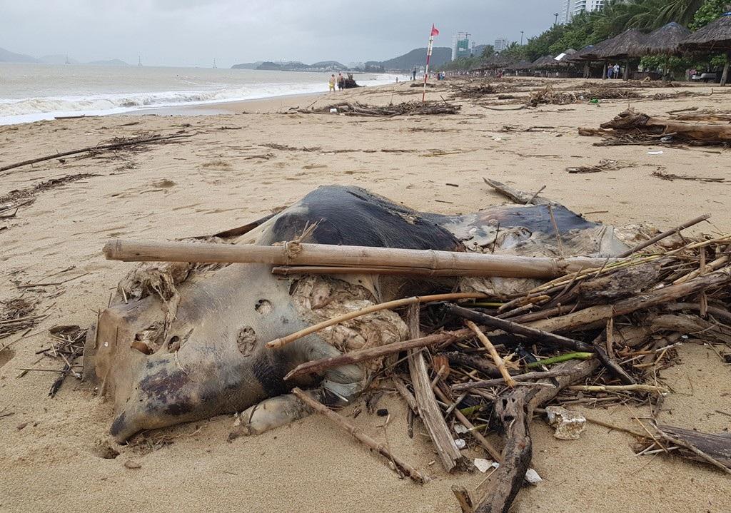 Nha Trang: Bãi biển vắng khách vì hàng tấn rác dạt vào bờ sau mưa lũ - Ảnh 5.