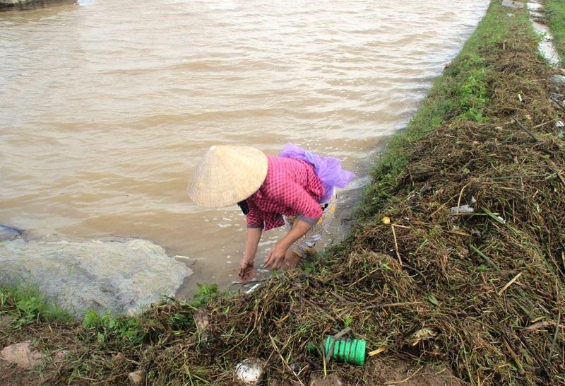 """Ngập lụt, nông dân """"mất"""" Tết Dương lịch ra đồng cứu… lúa - Ảnh 5."""