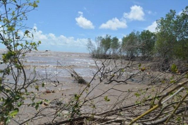 Tình hình sạt lở bờ biển tại Cà Mau đang diễn ra ngày càng nghiêm trọng. (Ảnh: CTV)