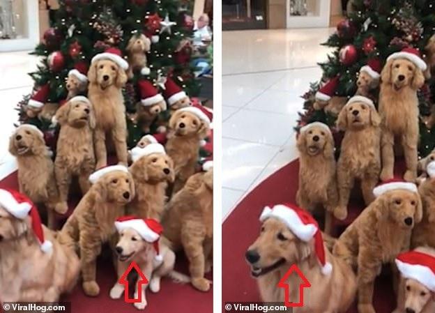 Đố bạn tìm ra những chú chó thật trong bài trí Giáng sinh này... - 1