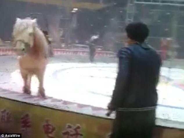 Sau một hồi vật lộn, cuối cùng, con ngựa cũng đã thoát khỏi móng vuốt của hổ và sư tử.