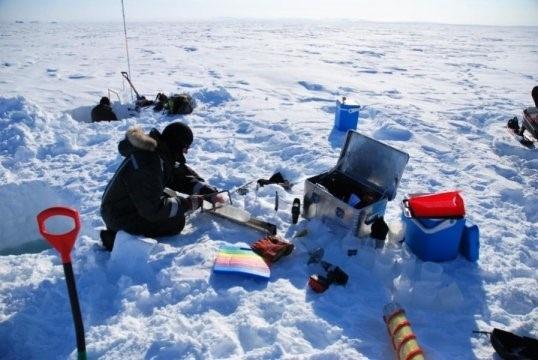 Tảo băng biển sinh trưởng mạnh trong bóng tối - 1