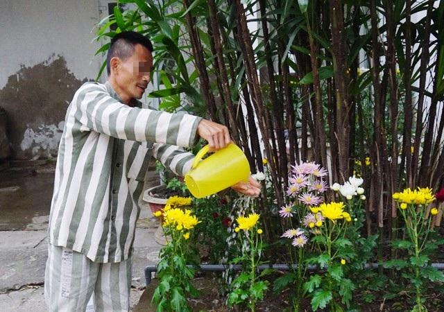 Một phạm nhân đang chăm chút những khóm hoa cúc trong khuôn viên phân trại quản lý phạm nhân của Trại tạm giam Công an tỉnh Nghệ An để chuẩn bị đón Tết
