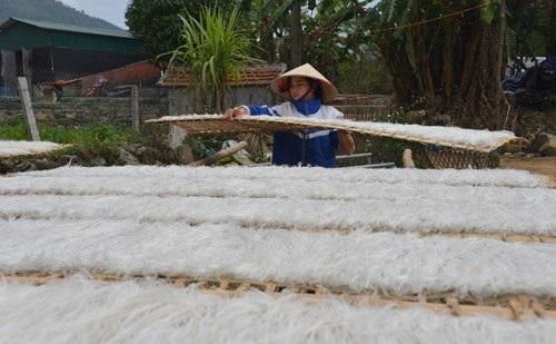 Củ dong sau các công đoạn xay bột, lọc, tráng, cắt sợi rồi được mang phơi khô dưới nắng.