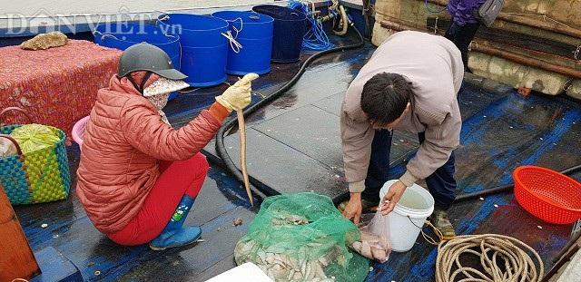"""Sắp đến Tết, ngư dân miền biển vẫn ra khơi """"săn"""" hải sản cuối năm - 4"""