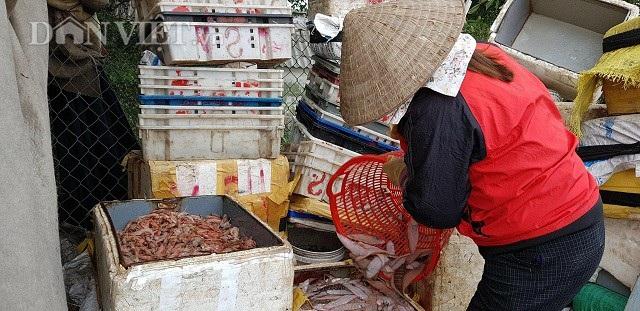 """Sắp đến Tết, ngư dân miền biển vẫn ra khơi """"săn"""" hải sản cuối năm - 5"""