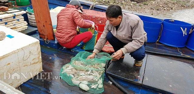 """Sắp đến Tết, ngư dân miền biển vẫn ra khơi """"săn"""" hải sản cuối năm - 3"""