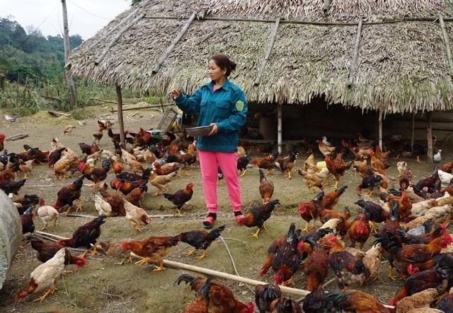 Chị Huyền hiện là chủ trang trại chăn nuôi gà có quy mô vào loại lớn nhất xã Yên Na (Tương Dương, Nghệ An)