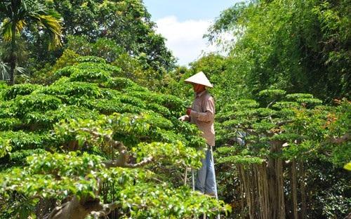 Công nhân chăm sóc các siêu cây tại nhà vườn của ông Ngọ.