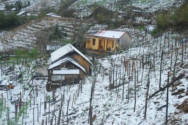 Tuyết rơi trắng đèo Ô quý hồ (Sa Pa) (Ảnh: Ngọc Triển)
