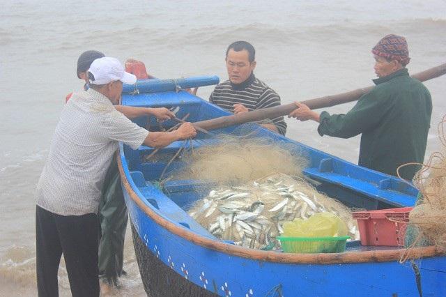 Trung bình mỗi chuyến biển, một thuyền đánh cá gần bờ thu về khoảng 7 đến 10 yến cá trích