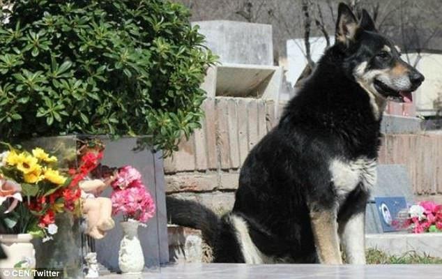 Capitan đã sống bên mộ chủ trong suốt 11 năm, kể từ năm 2006. Giờ đây, chú chó cũng đã ra đi, tất cả những người biết đến và yêu mến câu chuyện về Capitan đều mong chú sẽ được đoàn tụ trong niềm vui với người chủ của mình ở một nơi nào đó.