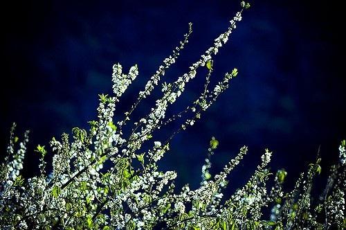 Mùa xuân về trên Tây Bắc - 3
