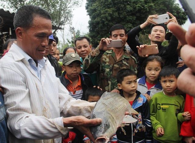 """Sau 5 ngày gây xôn xao, cuối cùng con """"cá lạ"""" biết bơi vòng tròn và """"nổi lên lặn xuống"""" tại huyện Đô Lương đã bị người dân buông chài bắt lên bờ. Hàng trăm người hiếu kỳ đã kéo đến để tận mắt nhìn con cá này. (Ảnh: Vĩnh Khang)"""