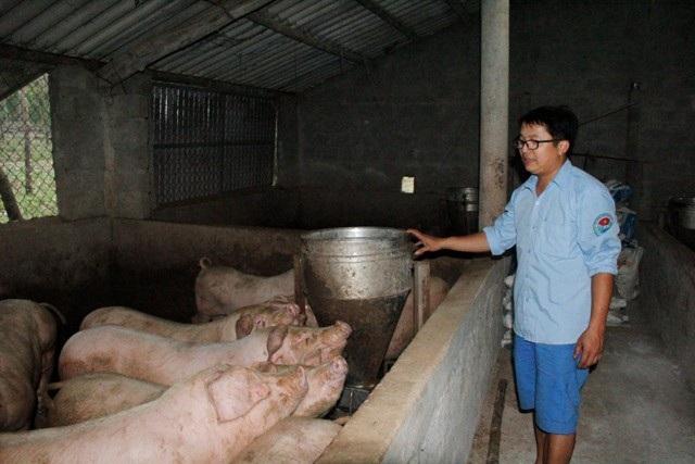 Gia trại nuôi lợn, gà, cá và trồng rừng của Huy mang lại hiệu quả kinh tế cao. Ảnh: Ngọc Vũ