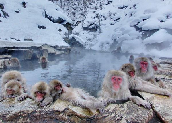 Những con suối nước nóng thu hút hàng triệu du khách - 3