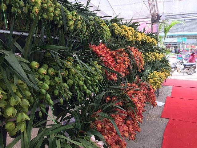 Để phân biệt đâu là địa lan Trung Quốc đại lục hoặc địa lan Đài Loan khá khó, chỉ những người bán địa lan mới có cách chỉ rõ.