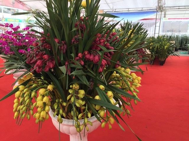 Nhiều loại địa lan được cho là nhập từ nước ngoài, nhưng chủ yếu từ Trung Quốc. Chỉ số ít được nhập từ Úc hoặc New Zealand song hầu hết đều đã có chủ đặt, không được bán tại hội chợ hoa.