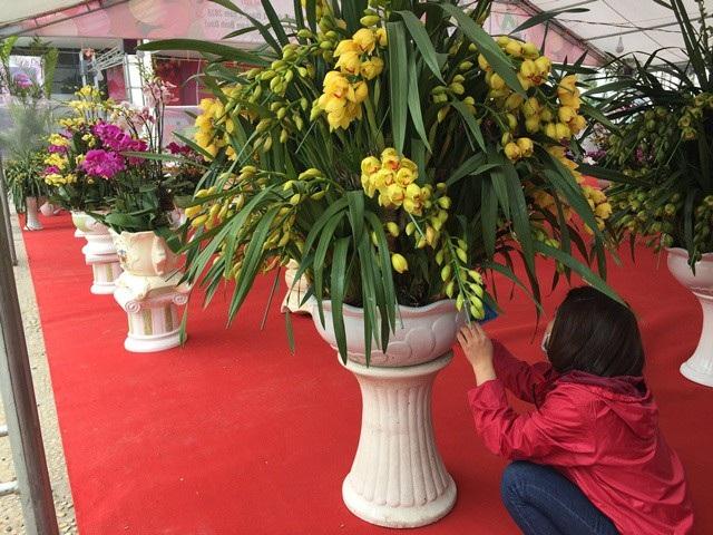 Theo tiết lộ, để kinh doanh hoa địa lan Trung Quốc, thương nhân Việt Nam chỉ cần bỏ tiền thuê địa điểm, bỏ vốn từ vài trăm triệu đồng cho đến gần 1 tỷ đồng để nhập hoa về bán tại Việt Nam. Tuy nhiên, nhiều người cho biết, có chủ người Trung Quốc đứng ra bảo lãnh nhập hoa, người bán chỉ cần bỏ số tiền khoảng 30% - 40% để lo bán.