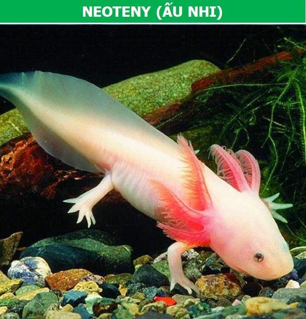 Khám phá những hiện tượng tiến hóa hết sức đặc biệt của sinh vật - 4