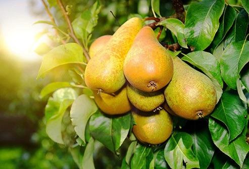 Những loại trái cây chứa nhiều và ít đường nhất - 4