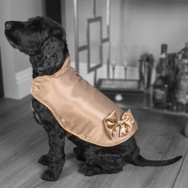 Áo khoác cho chó làm từ vàng 24 karat - 2