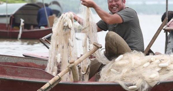 Anh Nguyễn Văn Tú cho biết: Không ít lần vừa giăng lưới gặp đàn cá lớn, nặng chìm cả phao tôi phải kéo lưới lên ngay. Những lúc đó thu khoảng 50 - 70kg cá, hai người ngồi gỡ cá cả ngày mới xong.