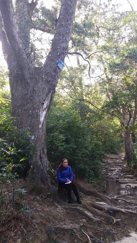 Chỉ cần dừng chân, hít bầu không khí trong lành và ngồi dưới bóng mát của những cây tùng cổ, bạn sẽ có cảm giác như được nạp thêm năng lượng vậy