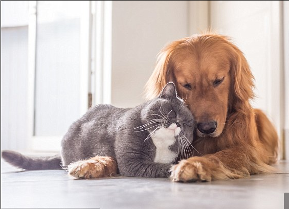 Các mối nguy hại nên đề phòng khi nuôi thú cưng - 1