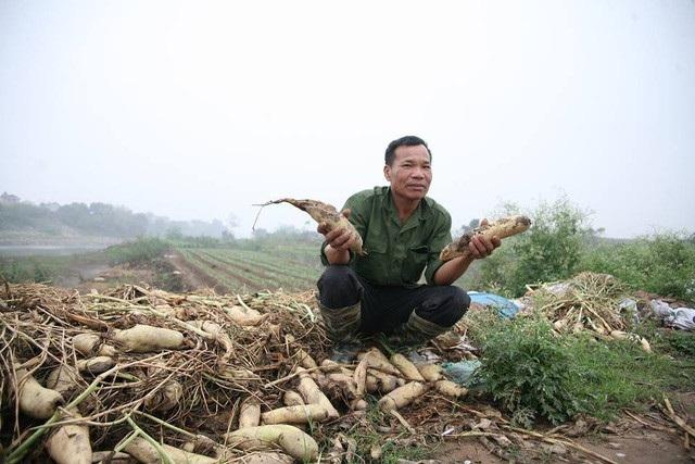 Hà Nội sẽ xây dựng chợ đầu mối tiêu thụ nông sản ở Mê Linh (Ảnh: Nguyễn Dương)