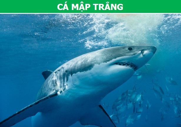 Điểm danh những loài cá nguy hiểm nhất trên thế giới (Phần 2) - 1
