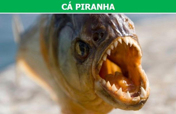 Điểm danh những loài cá nguy hiểm nhất trên thế giới (Phần 2) - 3