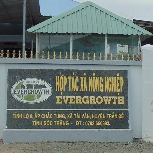 HTX bò sữa Evergrowth ở Sóc Trăng: Luôn đặt mục tiêu hoạt động minh bạch, rõ ràng - 1