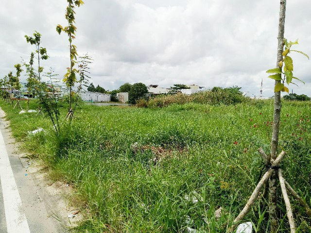 Từ khi xảy ra tranh chấp, khu vực đất của bà Lê Thị Khiêm hầu như đã trở thành đất hoang.